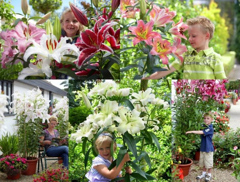 Цветы в магазин мир увлечений, орхидей доставка