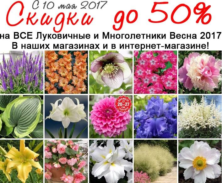 Цветы в магазинах мир увлечений, красных